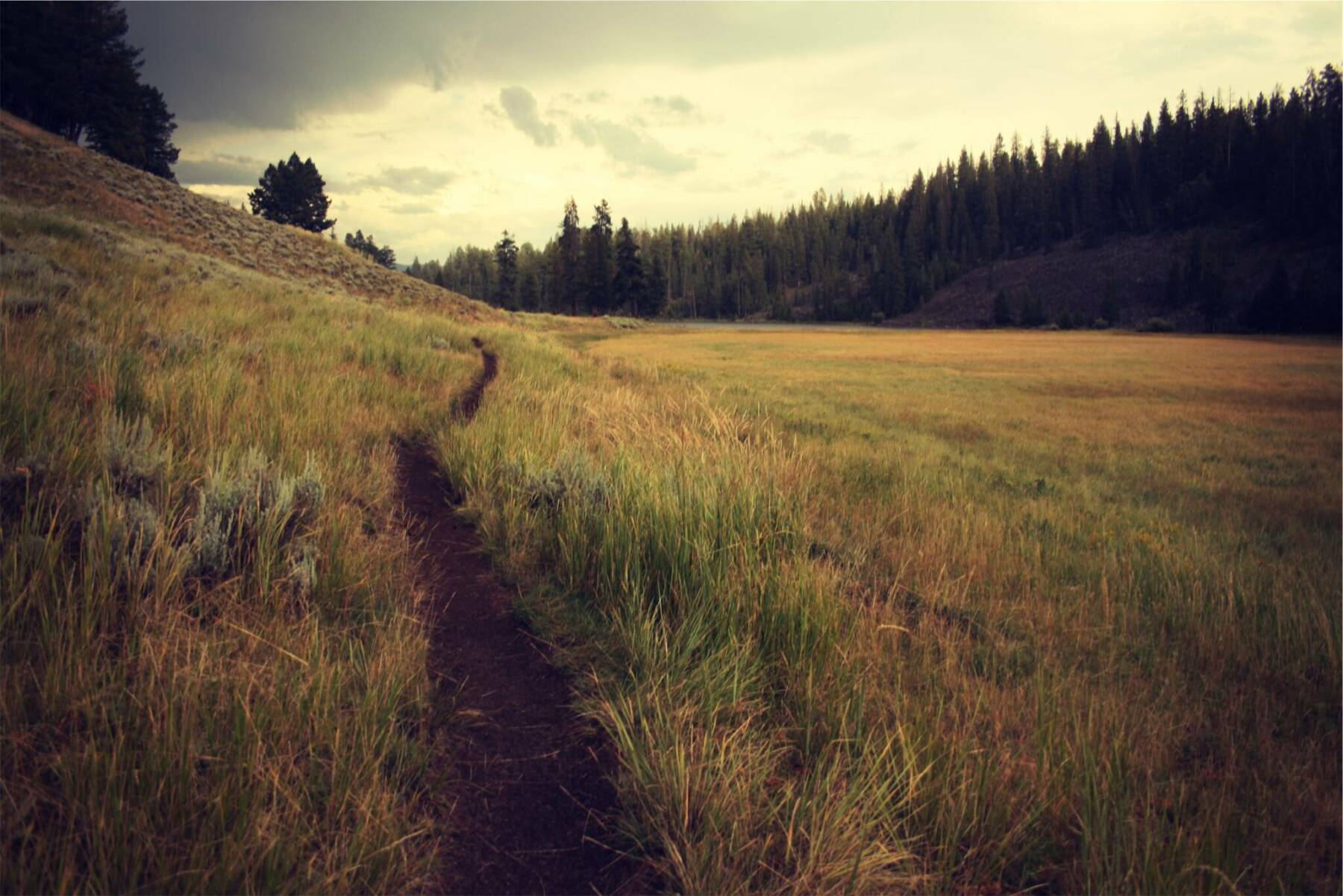 Grassy mountain single track trail